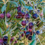 Olivenöl aus Nizza To Go